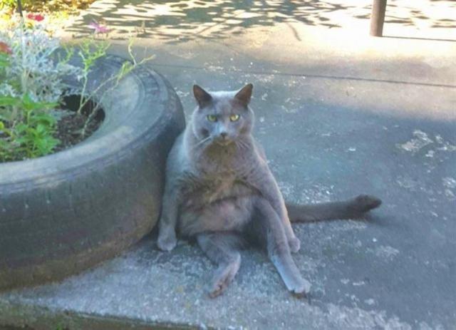 Женщина целый год завоёвывала доверие кота-бродяги, и он превратился в большого домашнего пушистика