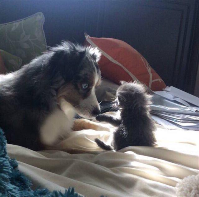 Самые крутые фотографии собак и комментариев их хозяев