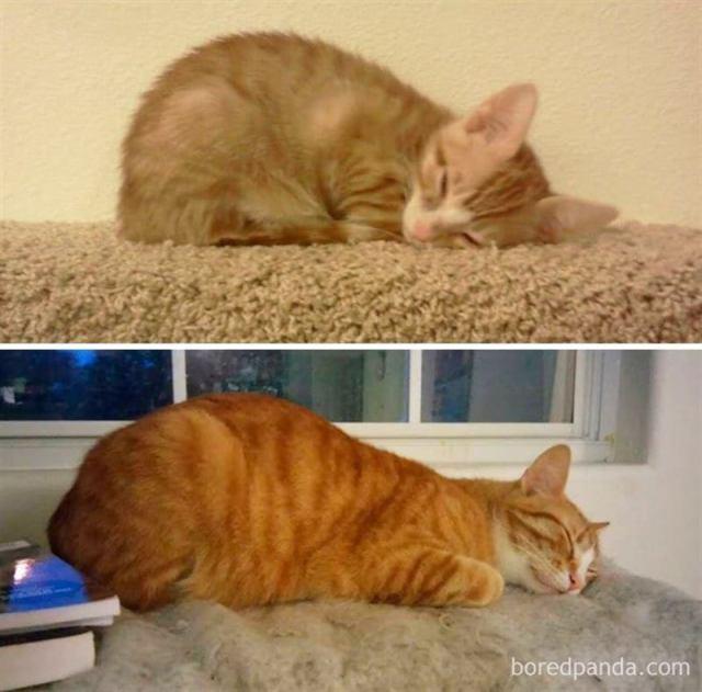 Фото милых котиков в детстве и во взрослом возрасте