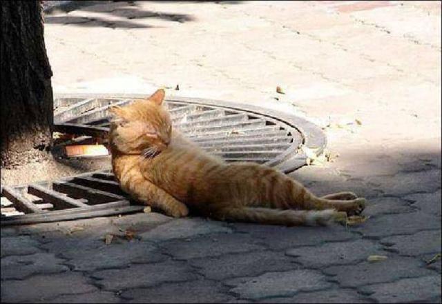 Вечно уставшие котики