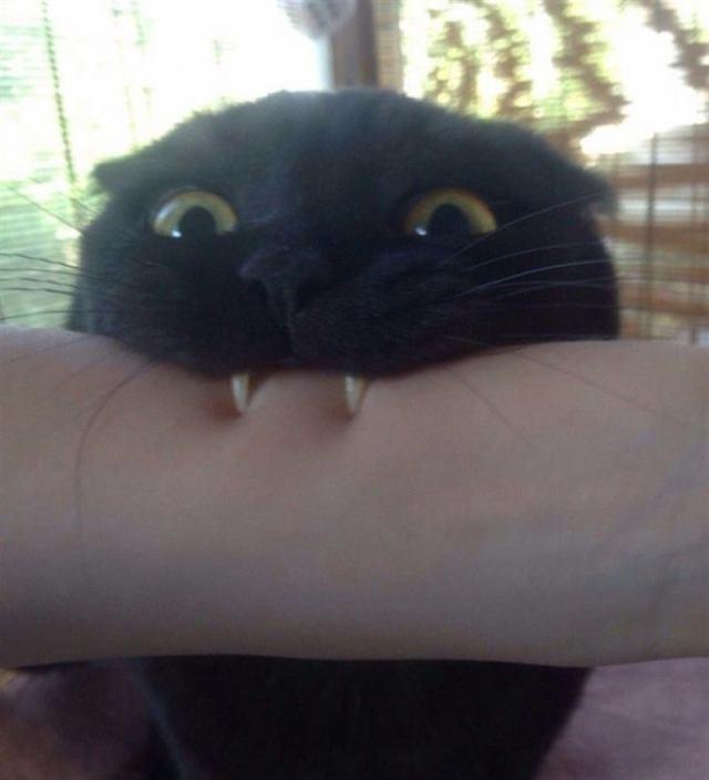 13 забавных фото о том, каково это жить с котом