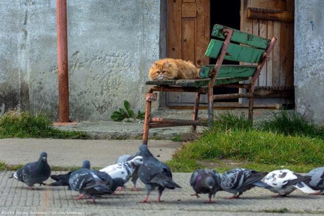 Фотограф заснял историю кота, который неудачно поохотился, но по-прежнему уверен в своём великолепии