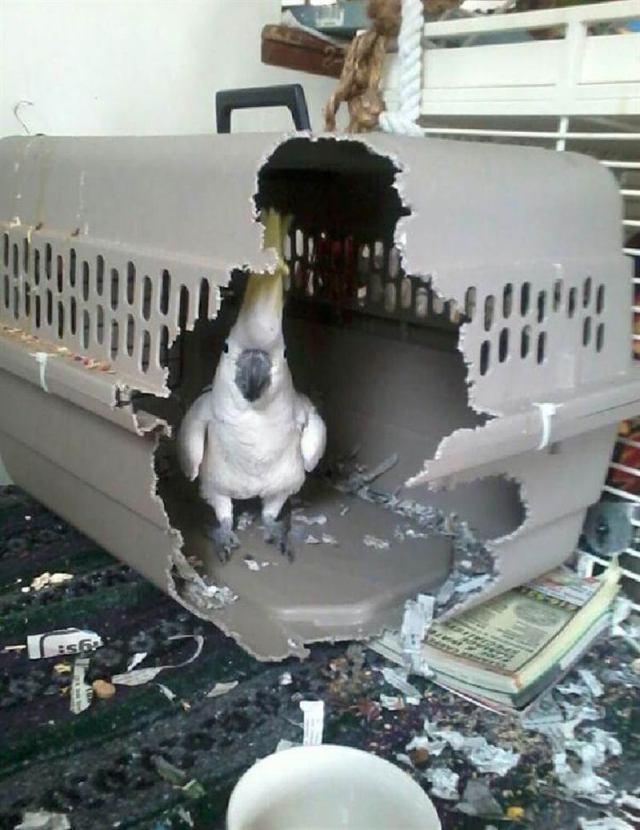 Животные, которые безо всякого стыда нарушать ваше спокойствие