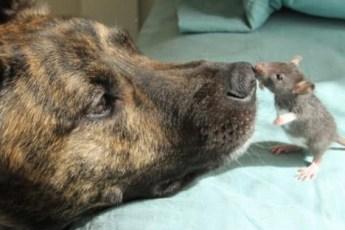 Встретив необычного друга, собака спасатель смогла побороть депрессию