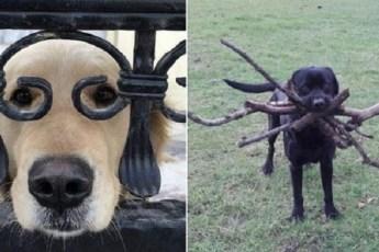 25 потешных собак, которые гарантировано развеселят вас
