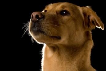 Удивительные фотографии, красивых и милых собак