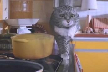 Рождественский мультик про смешного кота, все больше и больше набирает популярность