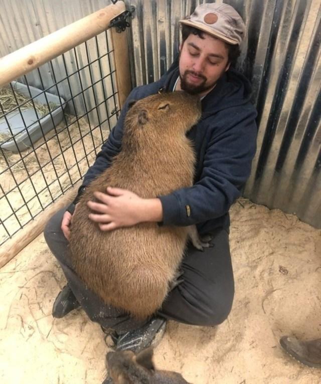 Самые любвеобильные животные, которые смотрят на нас со всей возможной нежностью