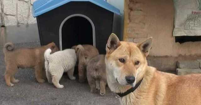 Собака и ее крохотные щенки пришли в дом к незнакомцу