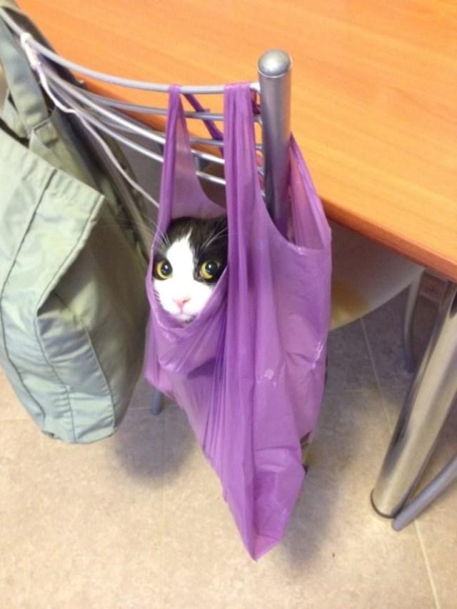 Самые правдивые фото, в которых отражена вся суть кошачьей натуры