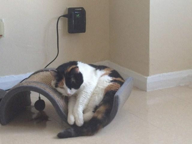 Фотографии очаровательных котов толстопузов