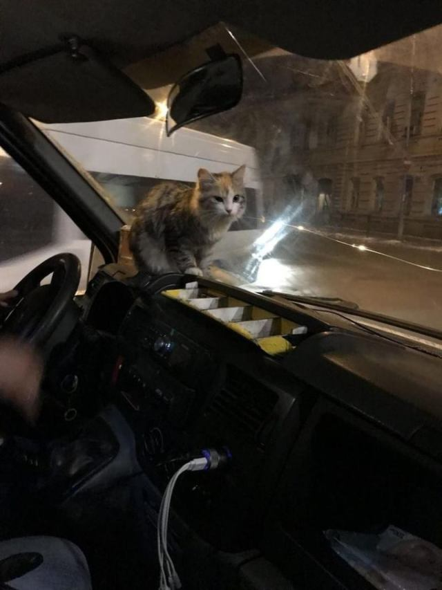 Замерзшая кошка запрыгнула в маршрутку. Водитель поступил как Человек
