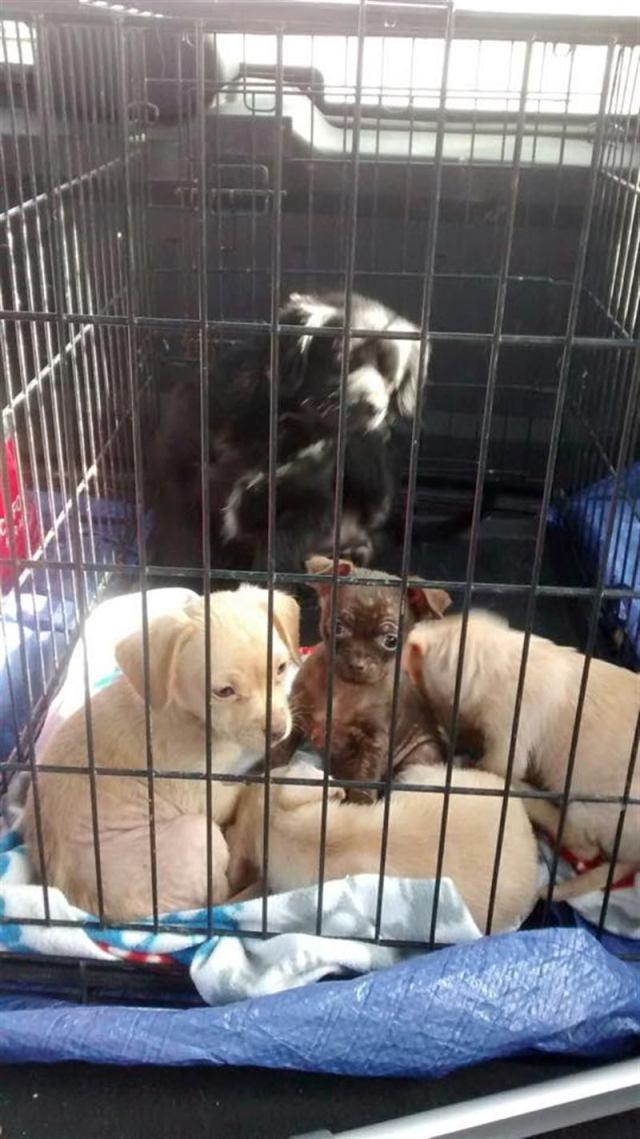 Водитель увидел, как собака царапает закрытую коробку на обочине и «плачет»