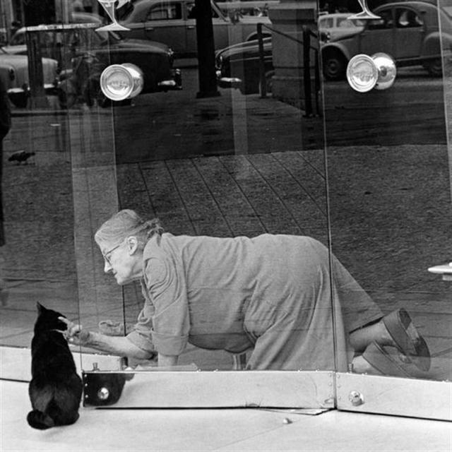 Запечатленная на фото любовь кошек и людей