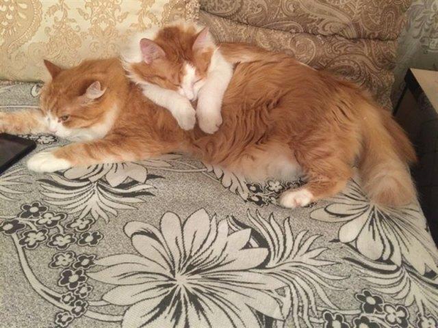 «Стоит ли заводить дворняжку?» Семья встретила на улице рыжего кота и забрала его домой