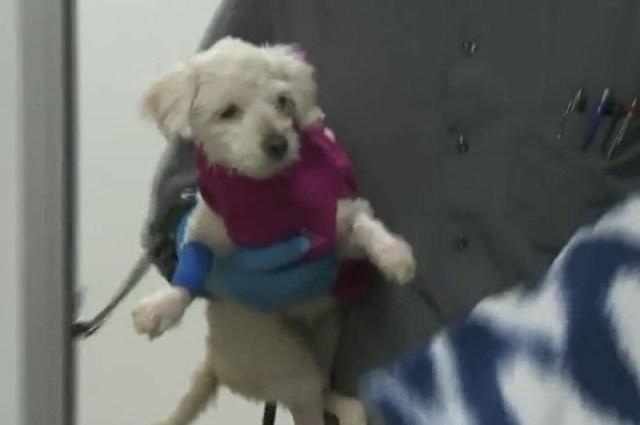 Избив собачку, кто-то выбросил ее в мусорный контейнер… Так, маленькая Хлое оказалась в беде!