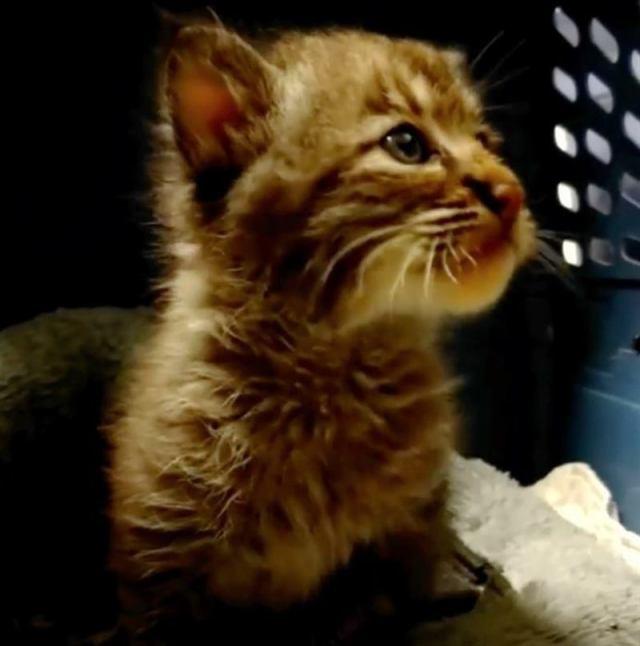 Мужчина спас котенка из-под машины, а тот оказался не таким уж и беззащитным