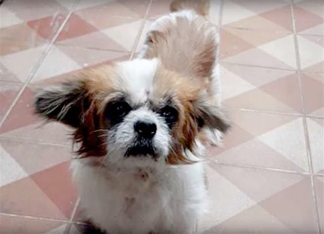 Маленькая выброшенная собака пролежала на обочине трое суток