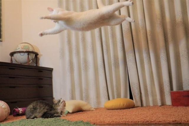 Забавные котейки, поднимающее настроение до небес