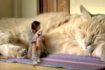 Доказана скрытая целебность кошек — особенно для женщин! 10 примеров того, как лечат коты