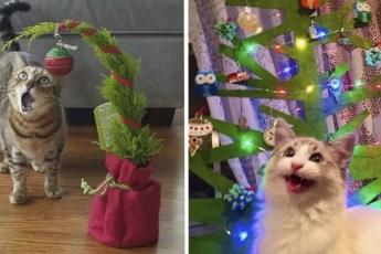 Кошки, проявляющие особое внимание к новогодним елкам