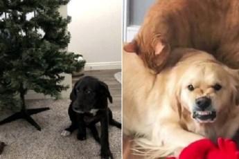 20 смешных фотографий, доказывающих, что не все собаки бывают хорошими мальчиками
