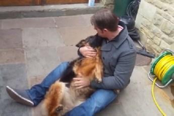 После длительной разлуки, пес рыдает при встрече с хозяином