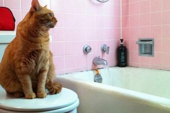 7 вещей, которые сложнее сделать, живя с кошкой
