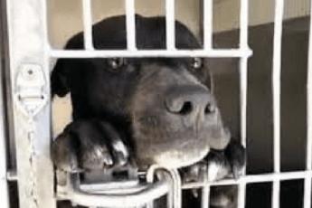 Стоя на задних лапках, щенок умоляет забрать его из приюта