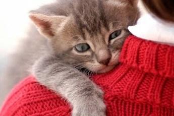 Как кошки просятся на руки