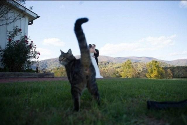 Доказательства того, что на самом деле кошка является в доме хозяином
