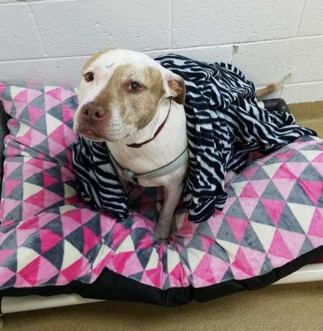 Ненужный «подарок»: людям подарили собаку, а они отнесли её в приют