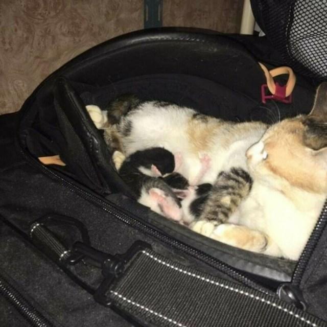 Бездомная кошка оставила необычный сюрприз в сумке хоккеиста. Милота