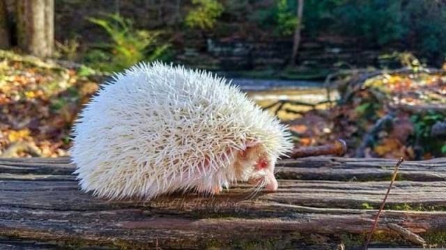 Удивительные животные альбиносы. Просто поразительно!