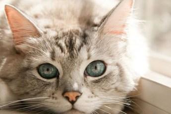 Основные заблуждения о кошках и котах