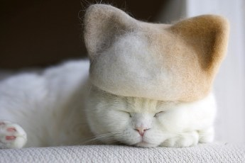 Японский фотограф делает очень примечательные фотографии модных котиков