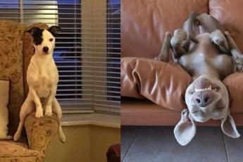 10 уморительных собак, с которыми не бывает скучно!