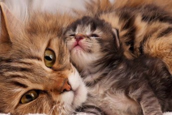 Сердобольная мамаша кошка успокаивает своего встревоженного малыша