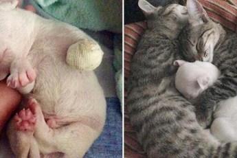 Чудом выжившему, но лишившемуся лапы щенку, помогли выздороветь коты