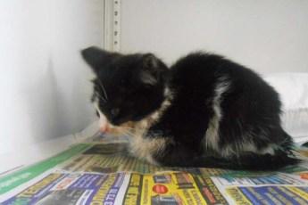Волонтеры нашли черно-белый кото-комочек, нуждающийся в заботе