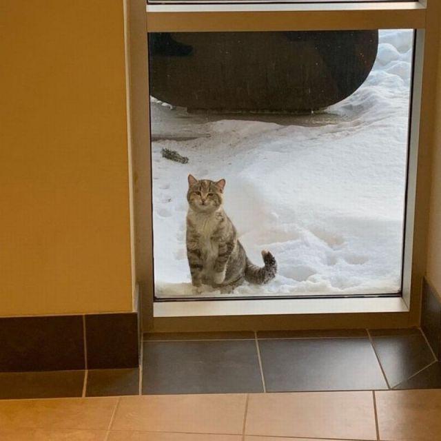 За дверью сидела осунувшаяся кошка. Она пришла за помощью к людям и не прогадала