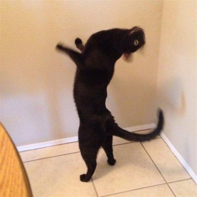 Растерянные котики, которых застигли в неприглядной ситуации