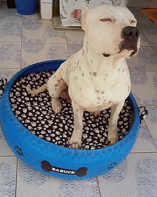 Парень из Бразилии мастерит удобные лежаки для животных и старых использованных покрышек