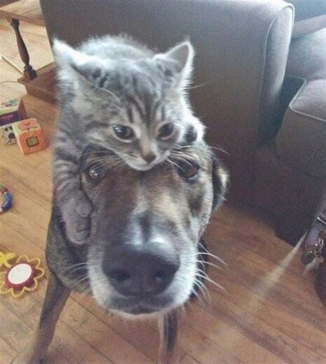 Двое домашних животных, это намного лучше, чем один питомец