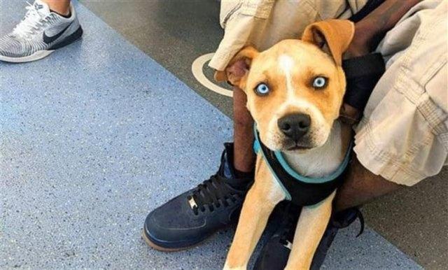 Невероятно красивые собаки-метисы, которые восхитят любого