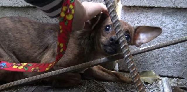 «Я вас боюсь!» — затравленная собака забилась в щель и никого к себе не подпускала