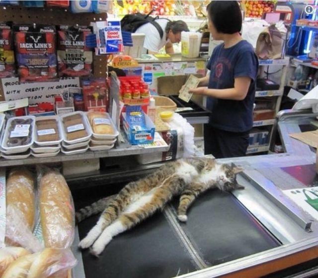Котики, которым все равно где примоститься лишь бы поспать