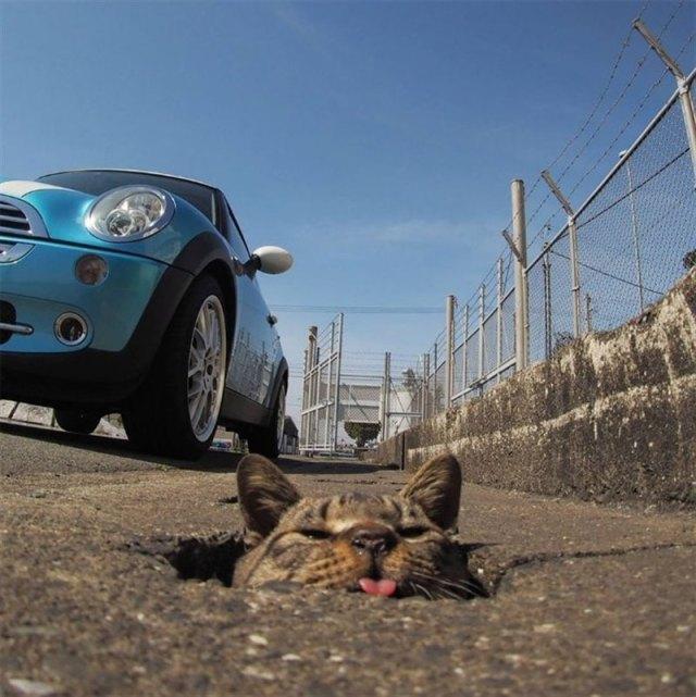 Снимки бездомных котов от японского фотографа, жизнь которых — настоящий рок-н-ролл!
