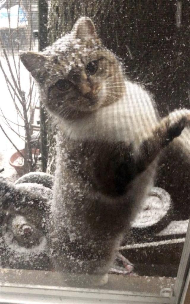 Отчаянная мать в мороз принесла котят к людям, и только через год вернулась сама
