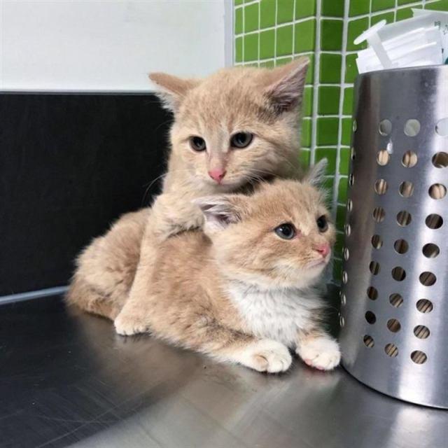 Котята жались к друг другу, заглядывая в окно голодными глазами